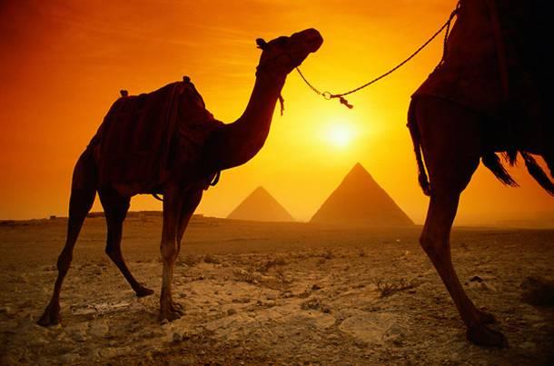 Egypt Camels:pyramids